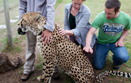Cheetah Conservation Project